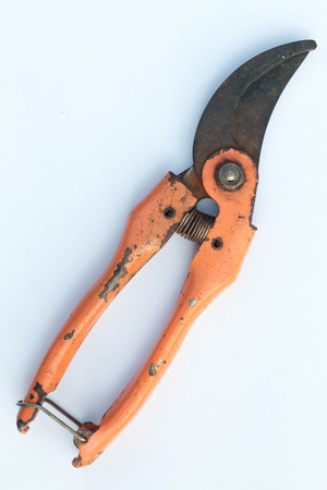 trimming: Scissors is cutting branches from tree, trimming Stock Photo