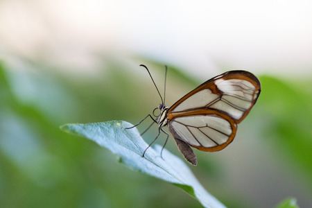 Blue delicate Butterfly Stock Photo