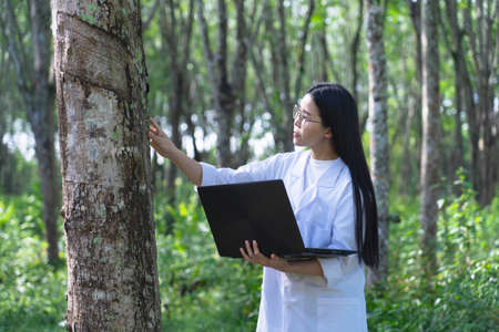 Female botanists in white coat with laptop at the forest.Young beautiful asian scientist woman looking at the bark of the rubber tree and note for researches rubber latex development.working outdoor.