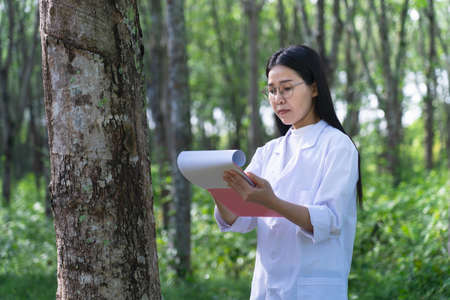 Female botanists in white coat at the forest.Young asian scientist woman looking at the bark of the rubber tree and make notes to paper in clip board for researches rubber latex development