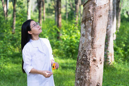 Female botanists in white coat at the forest.Young asian scientist woman looking at the bark of the rubber tree and measure the trunk size by using a tape measure researches rubber latex development Banco de Imagens