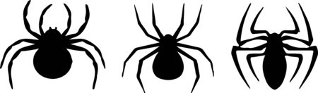 spider icon on white background
