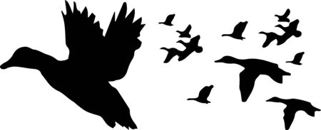 Birds are flying on white background
