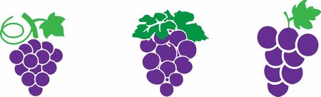 grape icon on color background