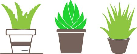 aloe vera icon on white background