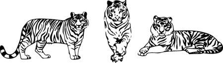 tiger vector on color background Vektorové ilustrace