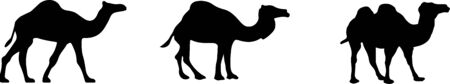 camel icon isolated on white background