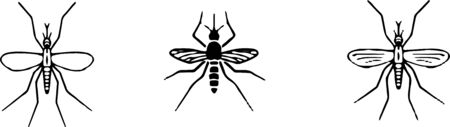 mosquito icon isolated on background