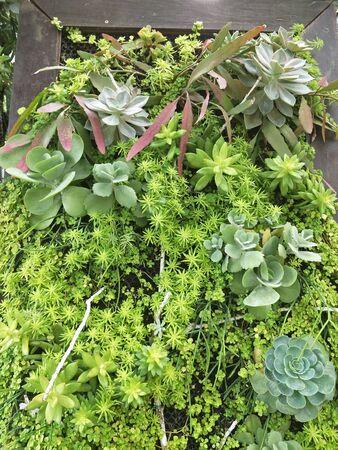 onamental plants in the garden