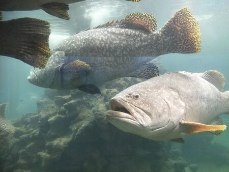 many kind of fish in the aquarium