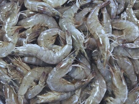 shrimp at the outdoor market