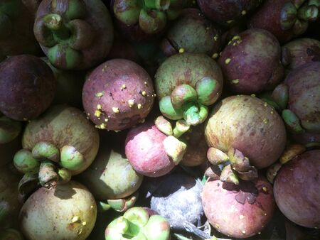 Fresh mangosteen from garden Thailand