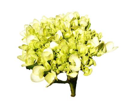 beautiful flower isolated on white background Reklamní fotografie