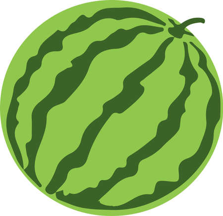watermelon vector on white background