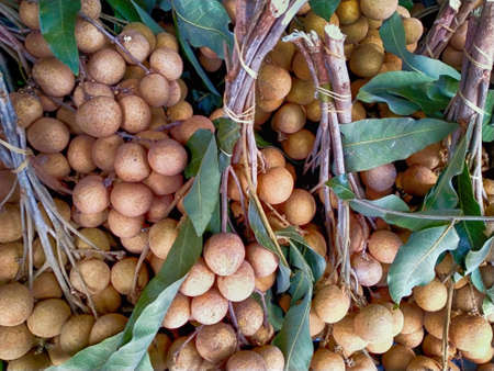 Natural sweet longan, fruit, Fresh longan 写真素材