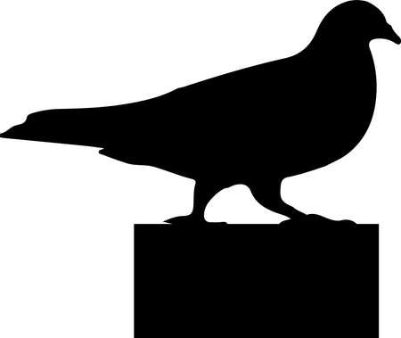 bird vector illustration isolated on background