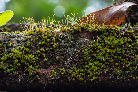 Close up texture of old stone wall covered green moss photo