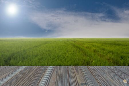 rice field: wooden table and rice field with the nature background