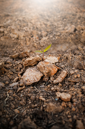 Ground, ground, brown background Organic farming close to nature, the texture of the mud environment on the ground that can grow crops. Agricultural The Farmers Farmer
