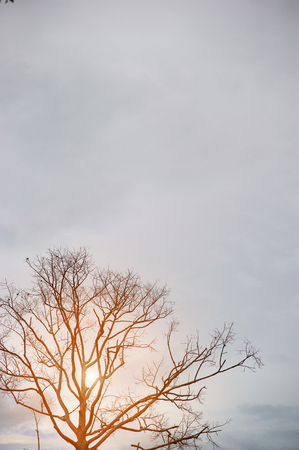 Tree branches and skies in summer. With sunset