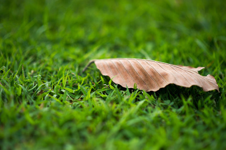 Leaves are dry On a light green grass. It has some meaning in it. And the best comparison.