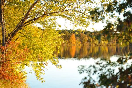 Peeking Into Fall At Chester Creek Stock Photo