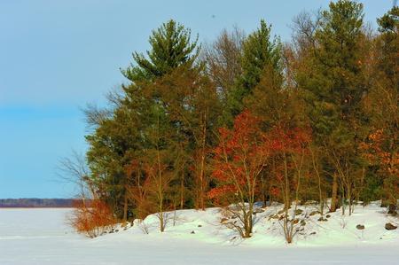 Bright Foliage on Petenwell Lake Winter Shoreline