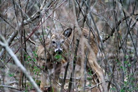 Herten in Camouflage - Peering bij de fotograaf