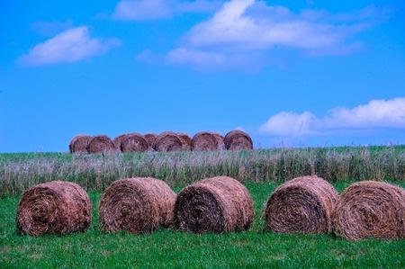 Round Hay Bales on Hillside - Cazenovia, Wisconsin Stock Photo