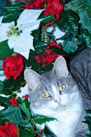 Christmas Kitty photo