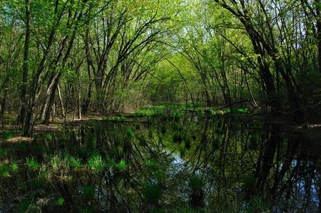 Gebogen Reflectie in Wisconsin Stockfoto