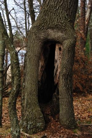 Tree - Lion's Den holle boomstam op Van Kuren Trail in Wisconsin