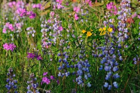 Wildflowers - Wildflower Achtergrond Mix - in Wisconsin