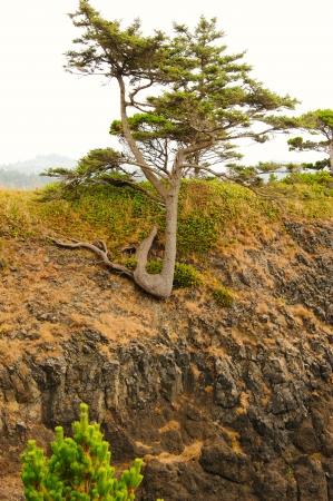 Schrap voor de Fall Into The Ocean - Yaquina Head, Oregon