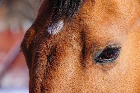 Gentle Eyes of Equine Friend in Wisconsin Stock Photo - 17306250