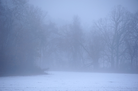 Foggy Frozen Winter Woods in Wisconsin Stock Photo