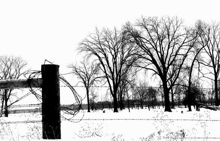stock vista: Black & White  - Buena Vista Refuge in Winter - Wisconsin