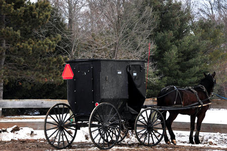amish buggy: Amish Buggy and Horse in Winter in Wisconsin