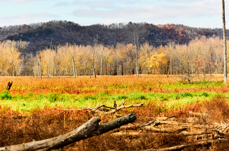 Explosion of Fall Color - New Albin, Iowa - Upper Mississippi Refuge Stock Photo