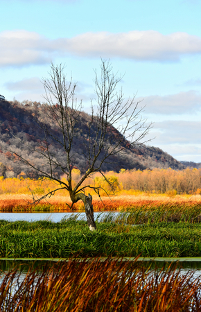 Vertical - Lone Tree - The Hills and Marsh in Full Fall Color - New Albin, Iowa - Upper Mississippi Refuge