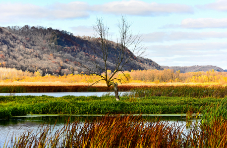 Horizontal - Lone Tree - The Hills and Marsh in Full Fall Color - New Albin, Iowa - Upper Mississippi Refuge