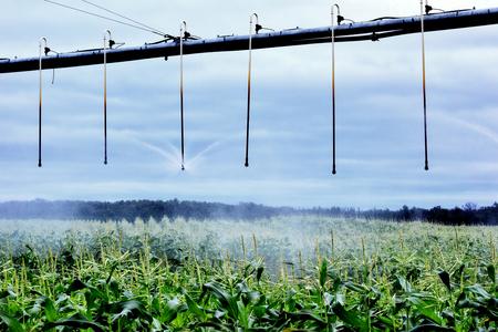 Misty Irrigation on Cornfield in Wisconsin
