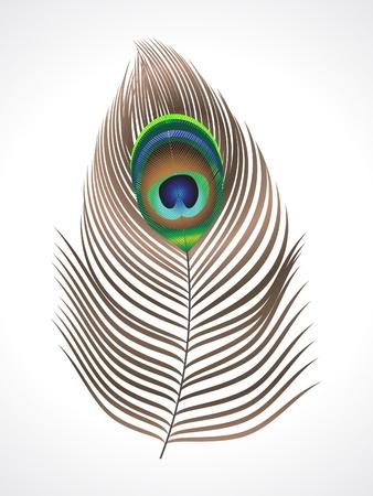piuma di pavone: illustrazione vettoriale della piuma di pavone astratta