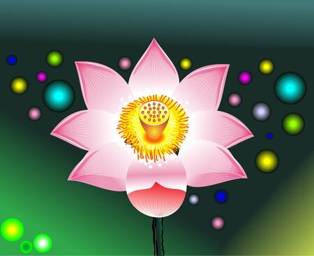 �back ground�: abstract pink lotus  with colorful back ground