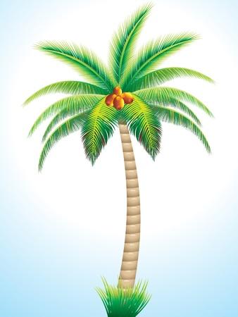 feuille arbre: palmier détaillé avec illustration vectorielle de noix de coco