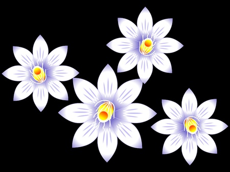 white lilly: abstract white lilly flower vector illustration