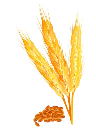 abstract wheat ears with ripel vector illustration