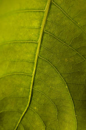 Leaves Stock Photo - 9310771