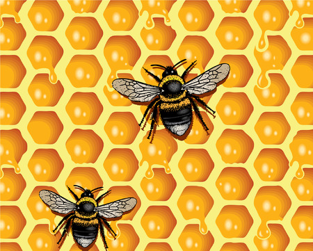 Honeycomb and Bees Illustration