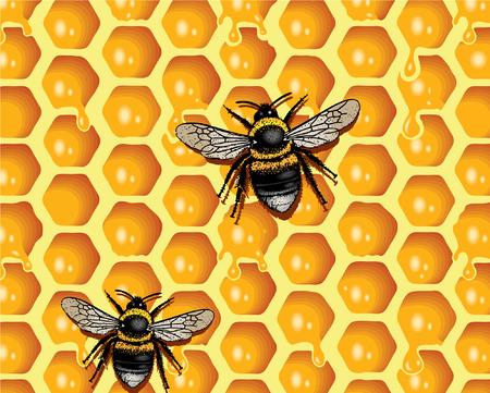 ambrosia: Honeycomb and Bees Illustration